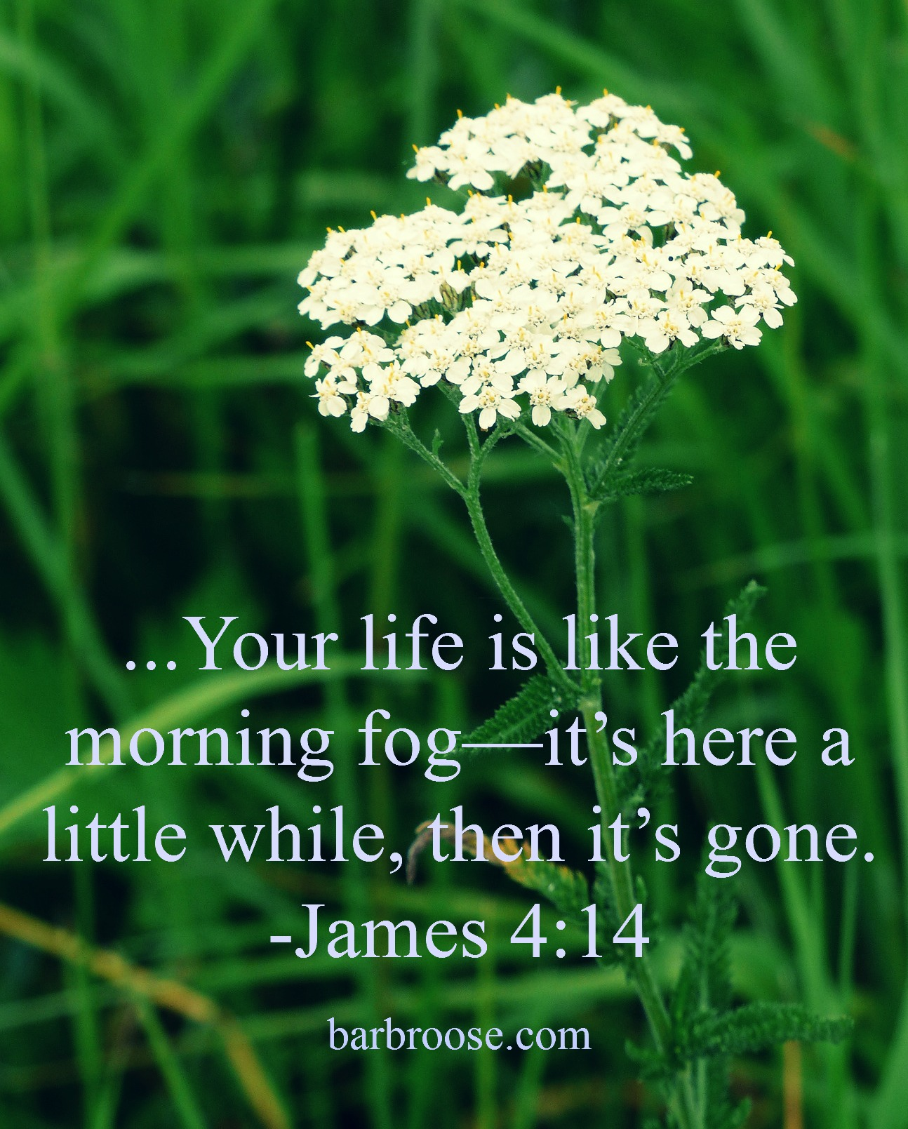 James-4.14